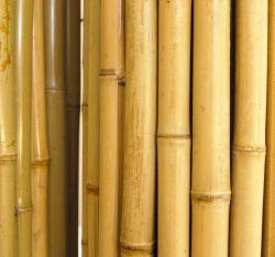 Vara de Bambu 4 metros Ponta Grossa nº7